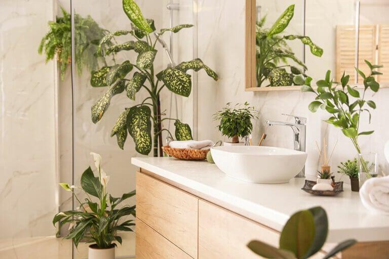 Conoce las mejores plantas para el baño