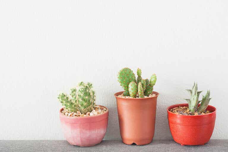 Plantas negativas y tóxicas que no deberían estar dentro de casa
