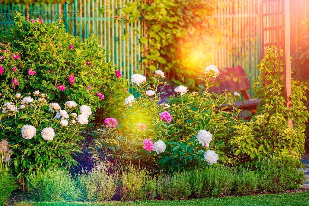 Plantas de sol para avivar el jardín en verano