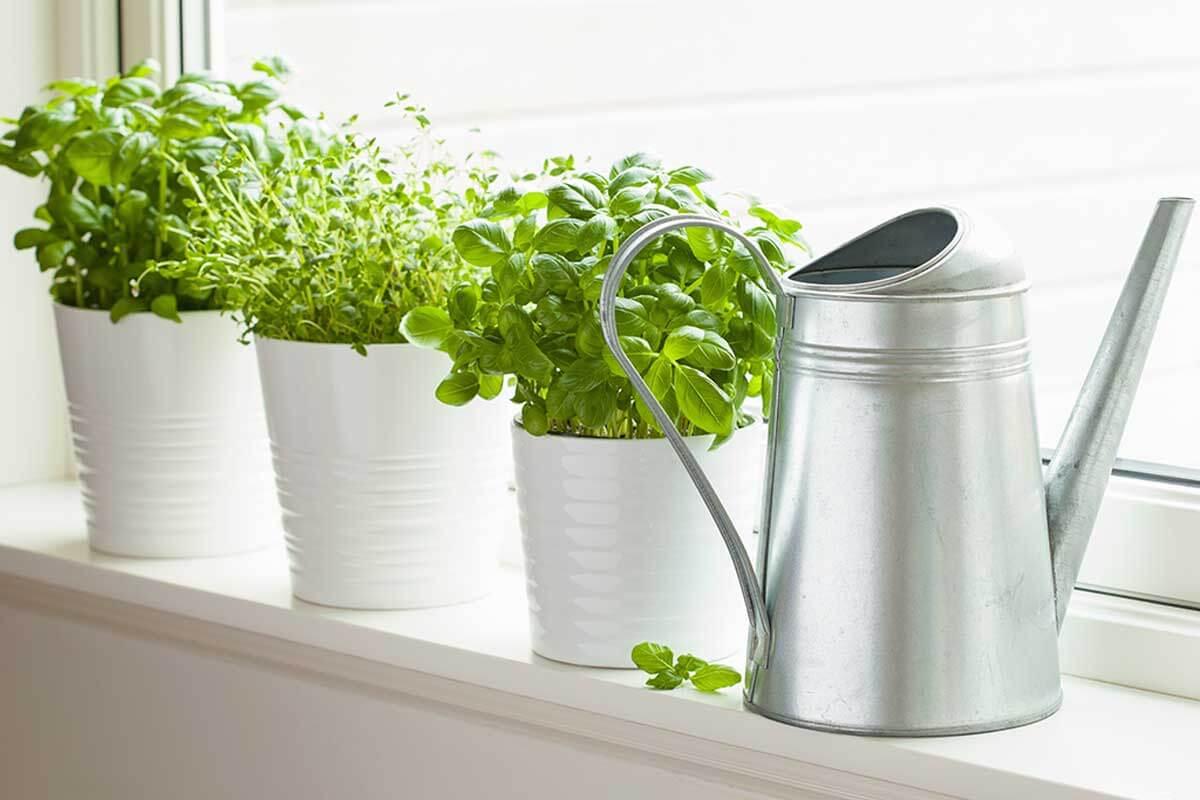 Entre los accesorios para hacer más acogedora tu cocina están un pequeño huerto.