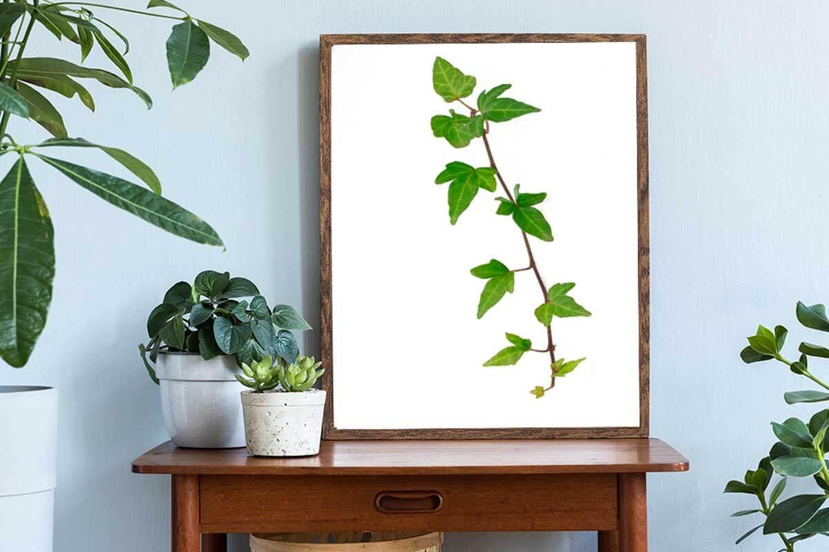 Crea tus propios marcos decorativos.