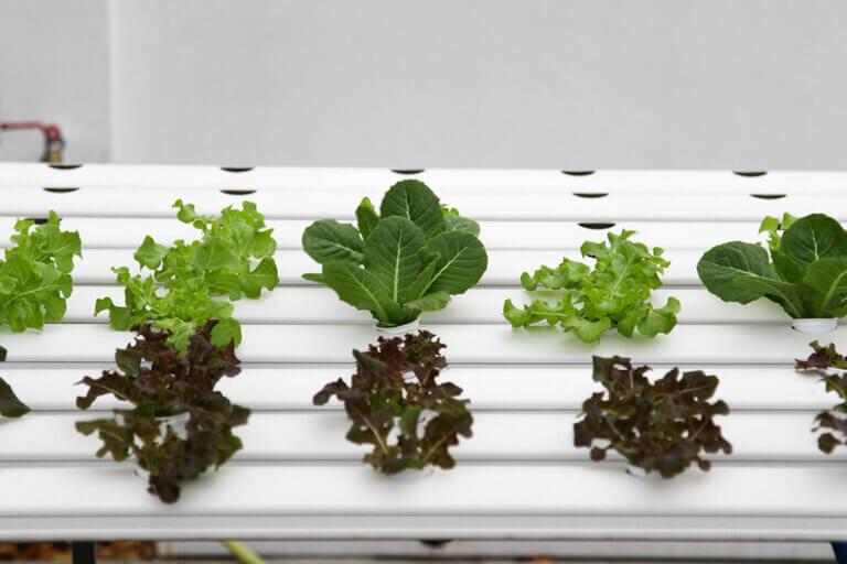 Consejos para tener un cultivo hidropónico en casa
