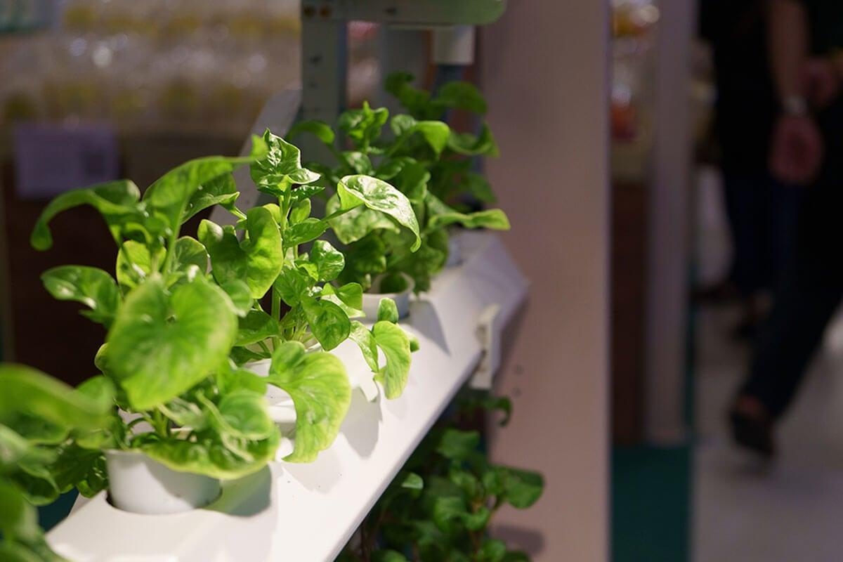 Sigue estos consejos para hacer crecer tus hortalizas.