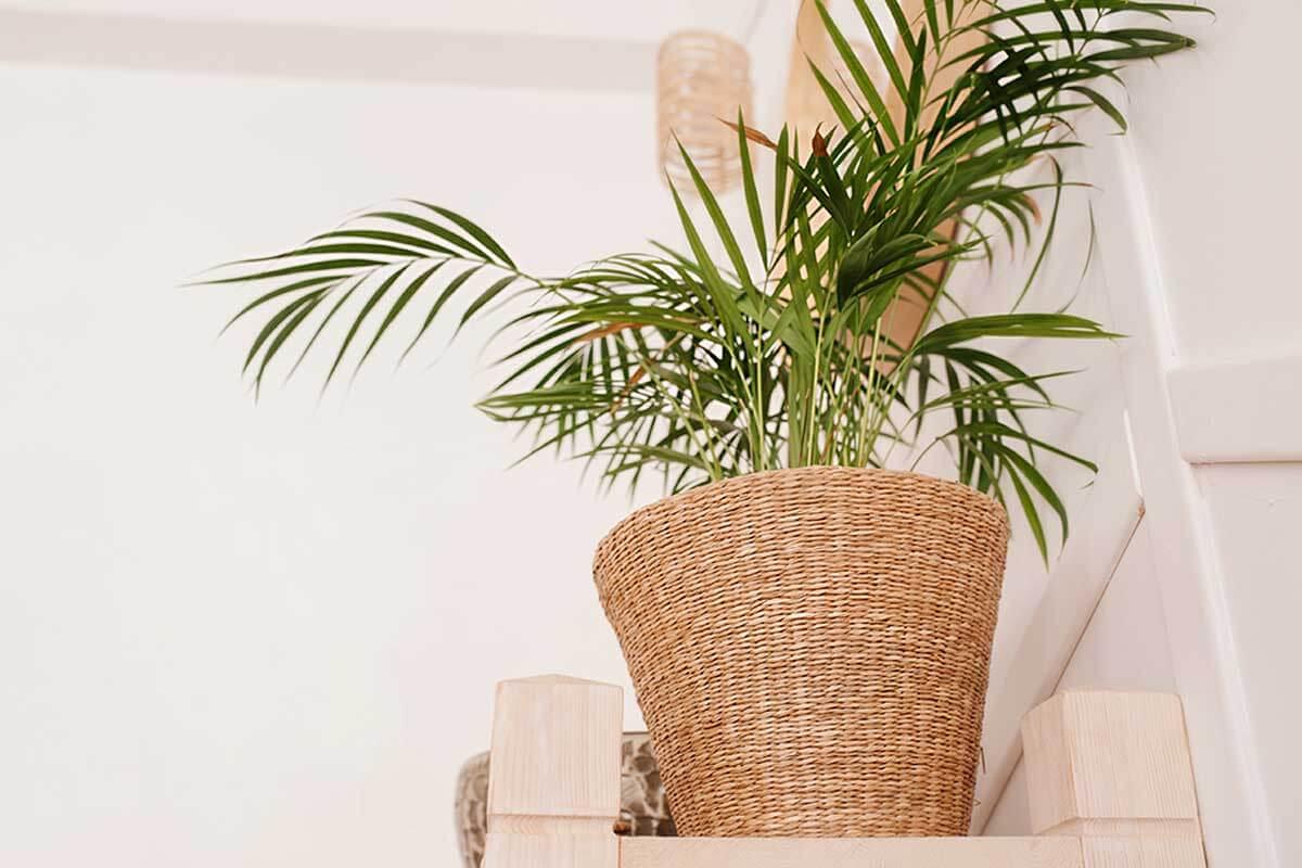 Coloca plantas en maceta o cestos.
