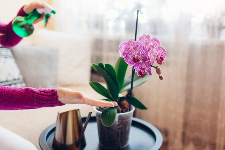 Cómo limpiar las hojas de las plantas para darles brillo