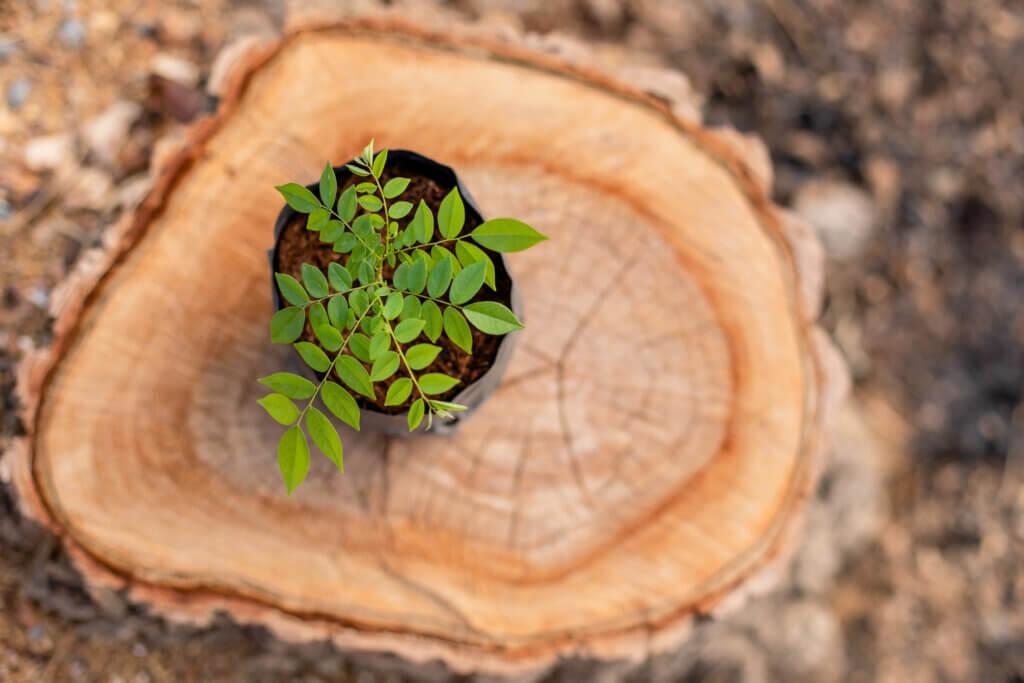 Una limpieza para devolverle la vida a tus plantas