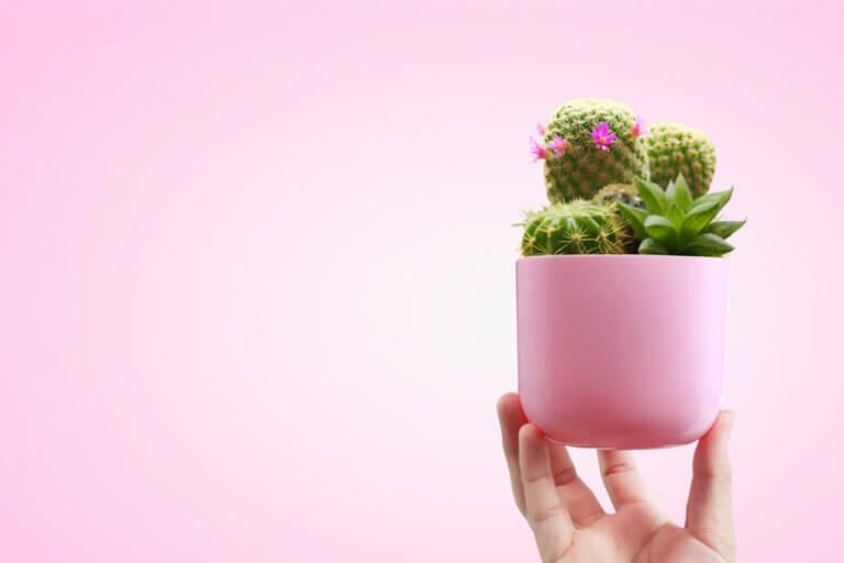 Cactus en macetas, aprende a cultivarlos