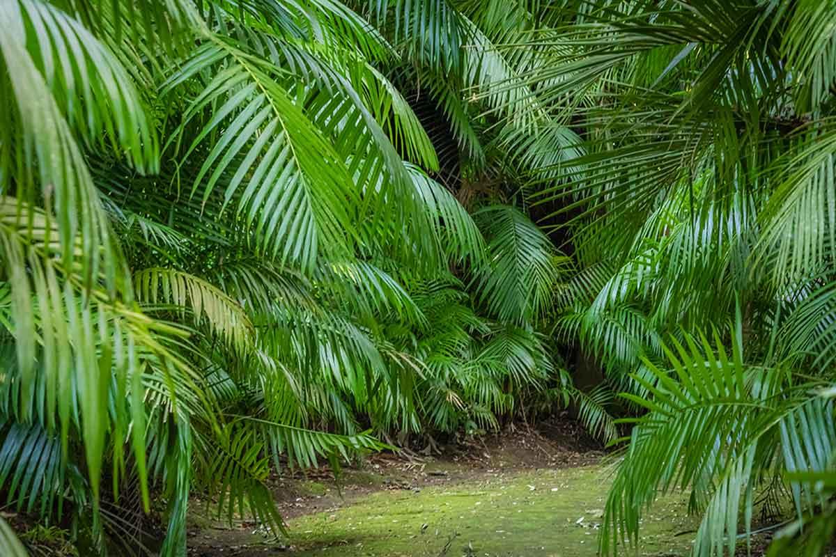 Cuidados especiales de la palmera.