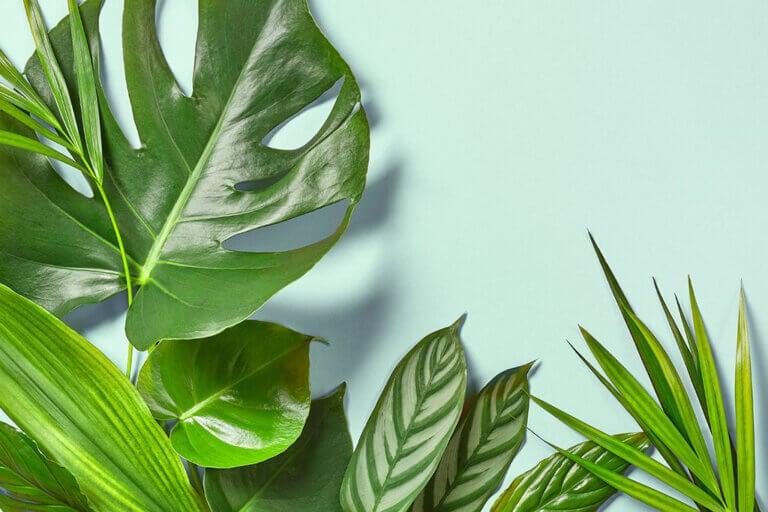 Plantas tropicales para transformar tus espacios