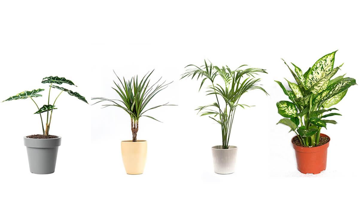 Tropical plants indoor spaces.