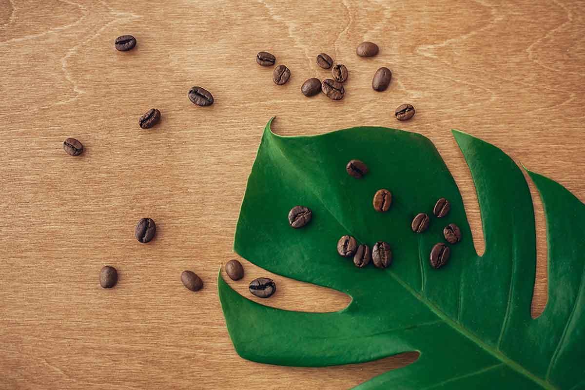Granos de café para preparar fertilizantes caseros.