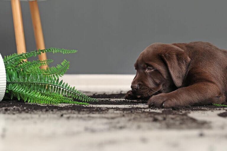 Plantas de interior tóxicas para tus mascotas