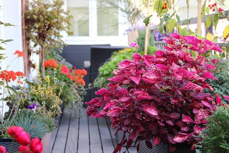 Plantas para la terraza: elige las indicadas