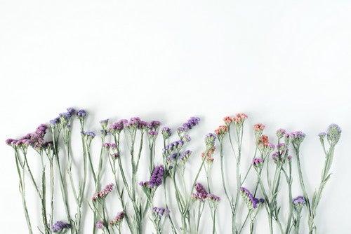 Alcuni fiori secchi