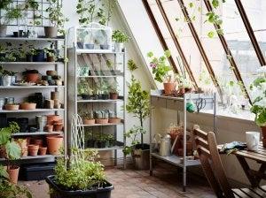 idea giardino verticale