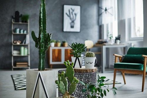 piante per climi secchi