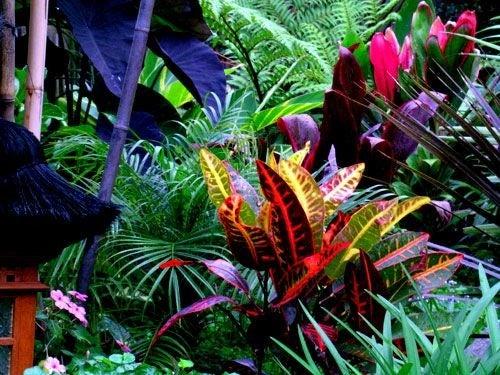Le migliori piante tropicali per la decorazione degli interni