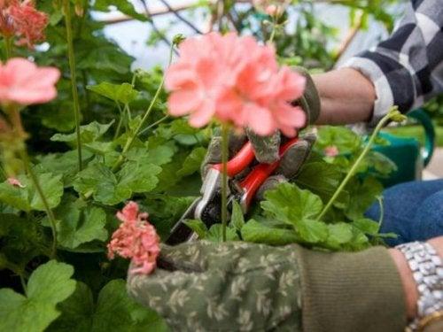 Potatura del giardino: gli aspetti da prendere in considerazione