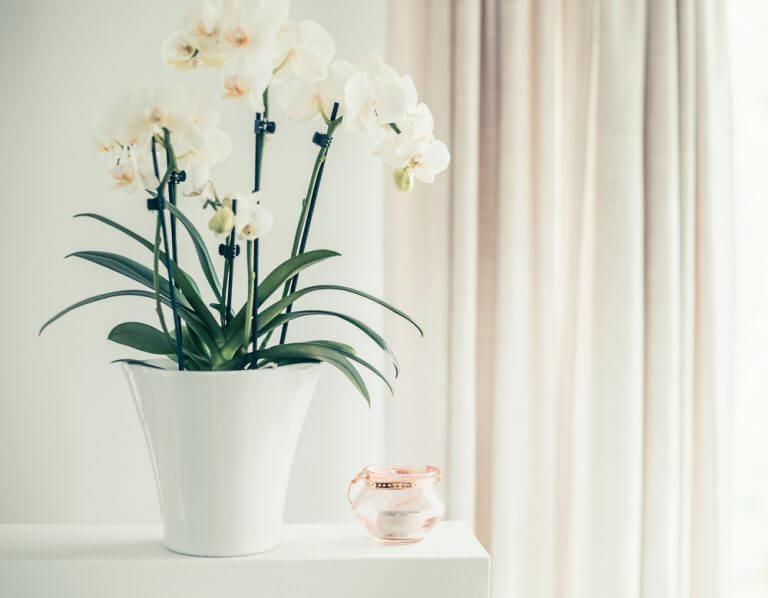 orchidee bianche con vaso bianco