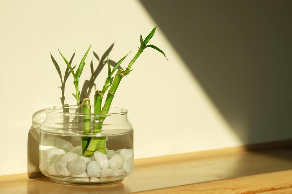 Vaso con acqua pietre e bambù