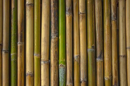 Decorare il bagno con il bambù: idee originali