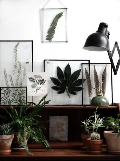 piante su scaffali di legno e quadri con foglie