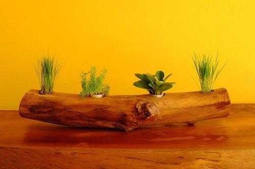 Un tronco orizzontale usato come fioriera