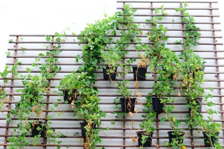 Piante appese alla parete con un supporto di legno