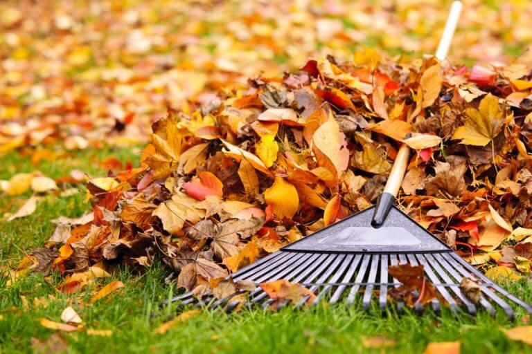 rastrello per tirare via le foglie