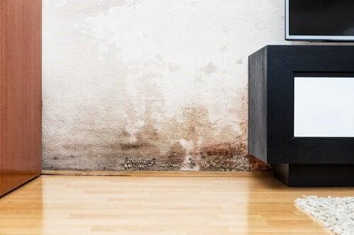 Problemi di umidità nei muri: come risolverli