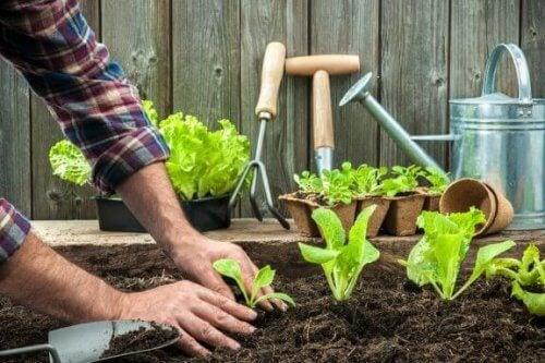 8 consigli per coltivare i propri ortaggi a casa