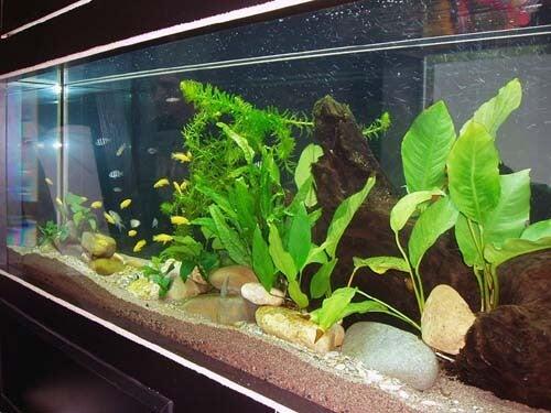 Cosa sapere sugli acquari per la casa