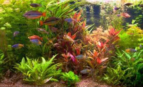 Consigli pratici per installare un acquario in casa