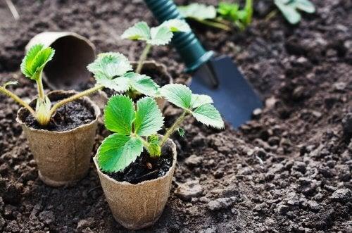 coltivare ortaggi in casa