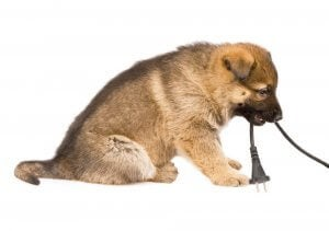 cucciolo con presa elettrica in bocca