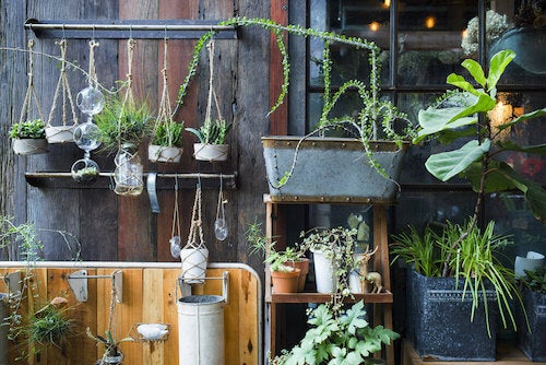 piante per giardino verticale in terrazza