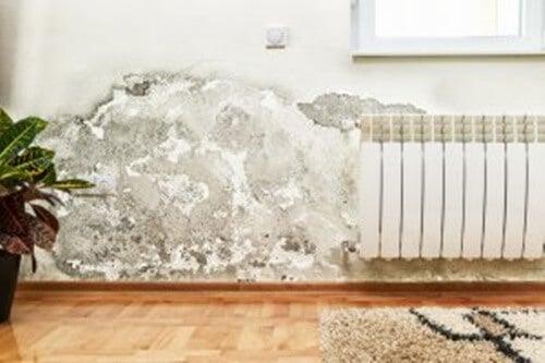 muro con umidità