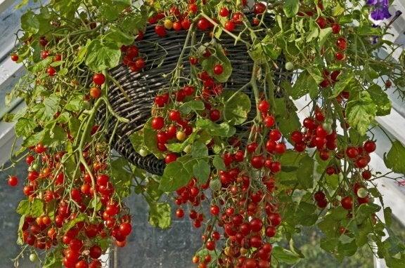 Giardino con frutta e verdura