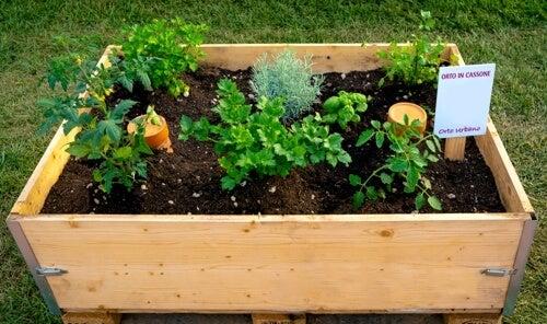 Come creare un orto sul terrazzo di casa: le casse in legno