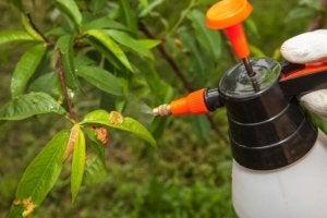 Prendersi cura delle piante eliminando i parassiti