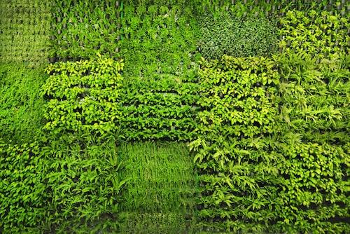 muro con fioriere e aiuole