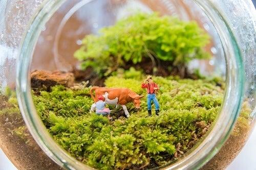 Giardini in miniatura: piccoli gioielli verdi fai-da-te