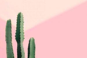 Cactus colonnari, piante resistenti e belle