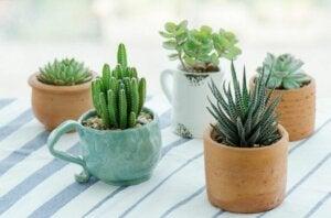 Vasetti di succulente di ceramica