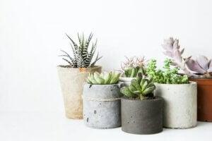 Vasetti colorati contenenti delle piante succulente