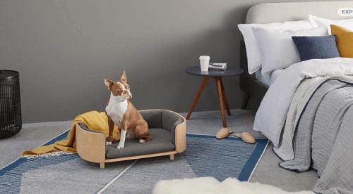 Mobili alla moda per animali domestici