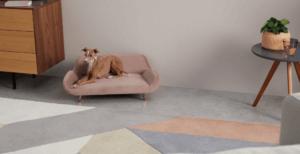 Divano alla moda per cane