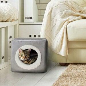 Cuccetta alla moda per gatti