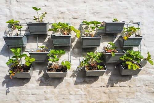 piante nei vasi appese al muro