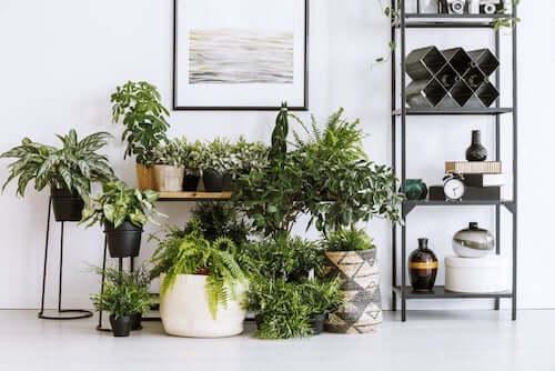 Composizione con piante da interno.